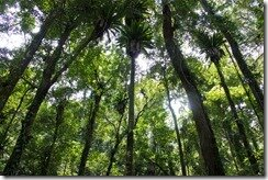 Филиппины природа лес