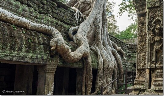 Angor Wat, Cambodia, Siem Reap, ruins, stone, roots, Ta prohm